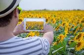 Rear view of young modern man taking photo of sunflower field by using digital tablet device