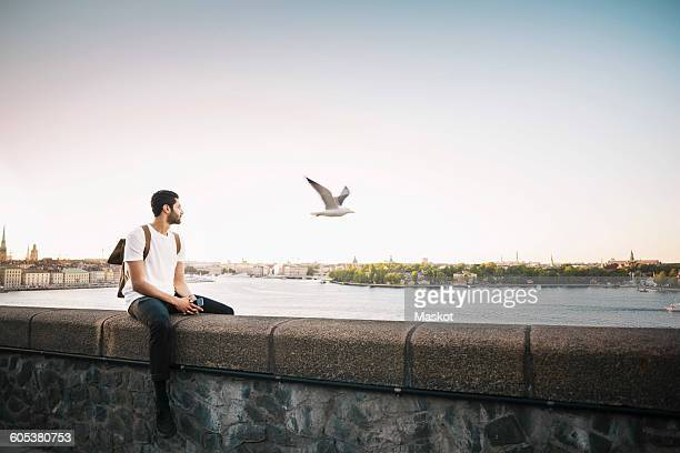 Tourist looking at seagull while sitting on retaining wall against clear sky