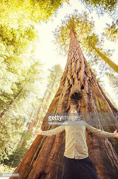 tourist on the Sequoia National Park