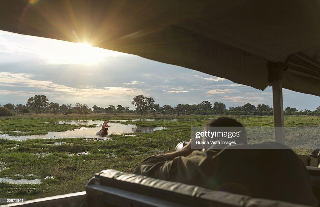 Tourist photographing a hippo in the Okavango Delt