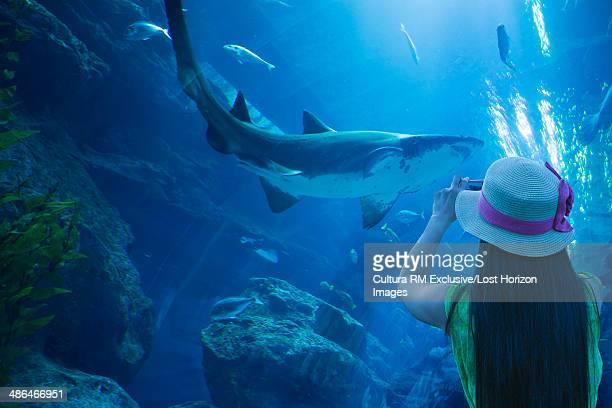 Tourist photographing a shark in the Dubai Mall Aquarium