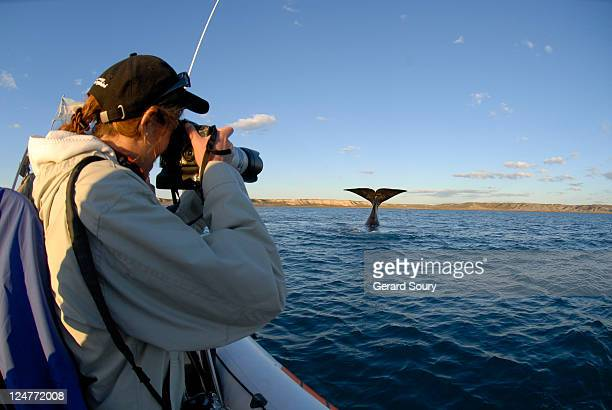 Tourist photographing Southern right whale (Eubalaena australis), Valdes, Patagonia, Argentina