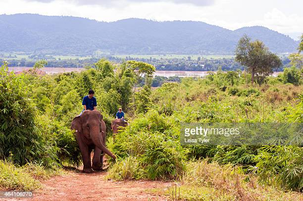 A tourist riding an elephant at the Anantara Golden Triangle a resort in Thailand's far north that borders Burma and Laos The resort has an elephant...