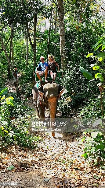 Tourist Riding On Elephant In Forest