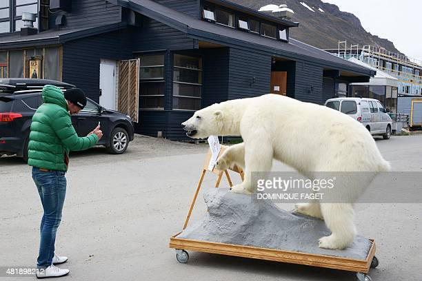 A tourist takes a picture of a stuffed polar bear on July 24 2015 in the center of Longyearbyen a community counting 3000 polar bears where...