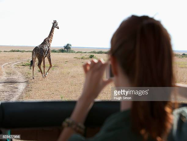 Tourist taking picture of running giraffe. Maasai Mara, Kenya