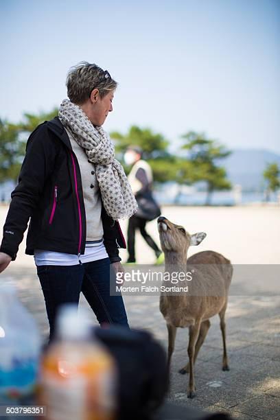 Tourist vs. deer