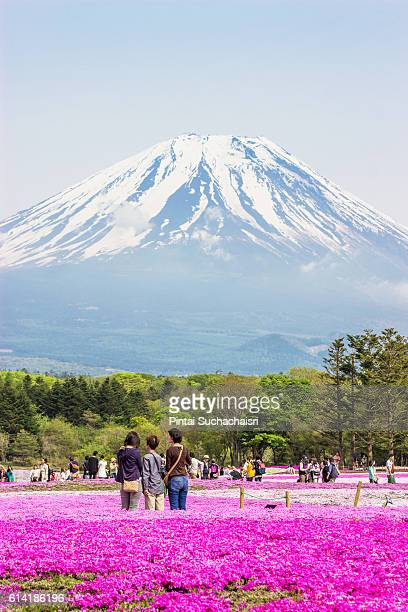 Tourists admiring Mt Fuji in the Pink Moss Festival, Japan