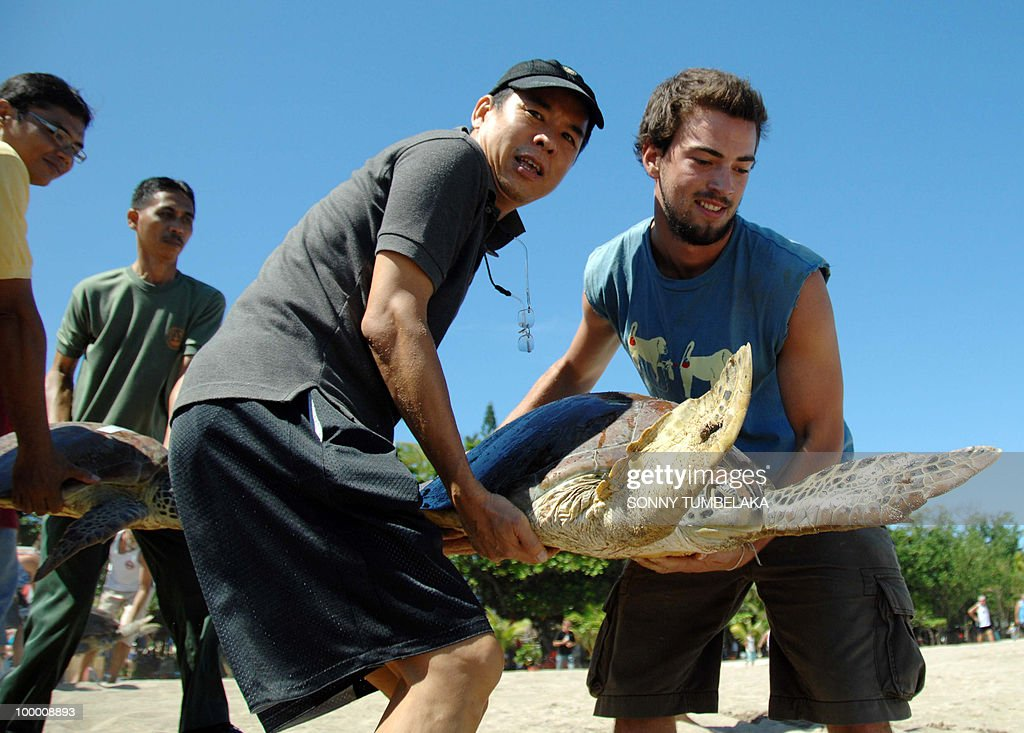 Tourists and locals carry a rescued green turtle at Kuta beach during a release ceremony participated by locals and tourists on the resort island of Bali on May 20, 2010 after they were seized from a warehouse in Bali. Police rescued 71 green turtles during the operation as part of campaign to protect the endangered marine turtles. Police said the turtles were probably destined for local food markets after the arrested suspect confessed to planning to sell the turtles for 700,000 rupiah (77 dollars) each.