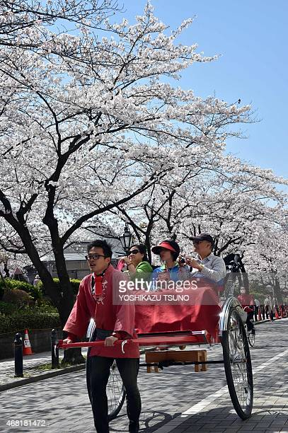 Tourists are taken for a ride in a rickshaw under fully bloomed cherry blossoms in Tokyo on March 31 2015 Viewing of cherry blossoms is a national...