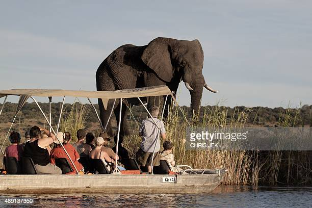 Tourists enjoy the sunset on the Chobe river in Botswana Chobe National Park in the north eastern of the country on March 20 2015 African elephants...