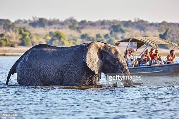 Tourists in boat cruise viewing elephant