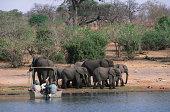 Tourists in boat viewing African elephants, Loxodonta africana, on the Chobe River, Chobe National Park, Botswana, Sub-Saharan Africa.