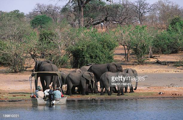 Tourists in boat viewing African elephants, Loxodonta africana, on the Chobe River, Chobe National Park, Botswana, Sub-Saharan Africa.
