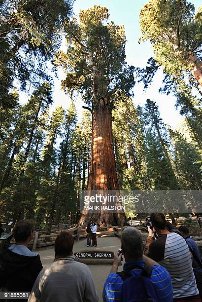 Tourists look at the General Sherman Giant Sequoia tree which is the largest recorded tree by volume in the world at the Sequoia National Park in...