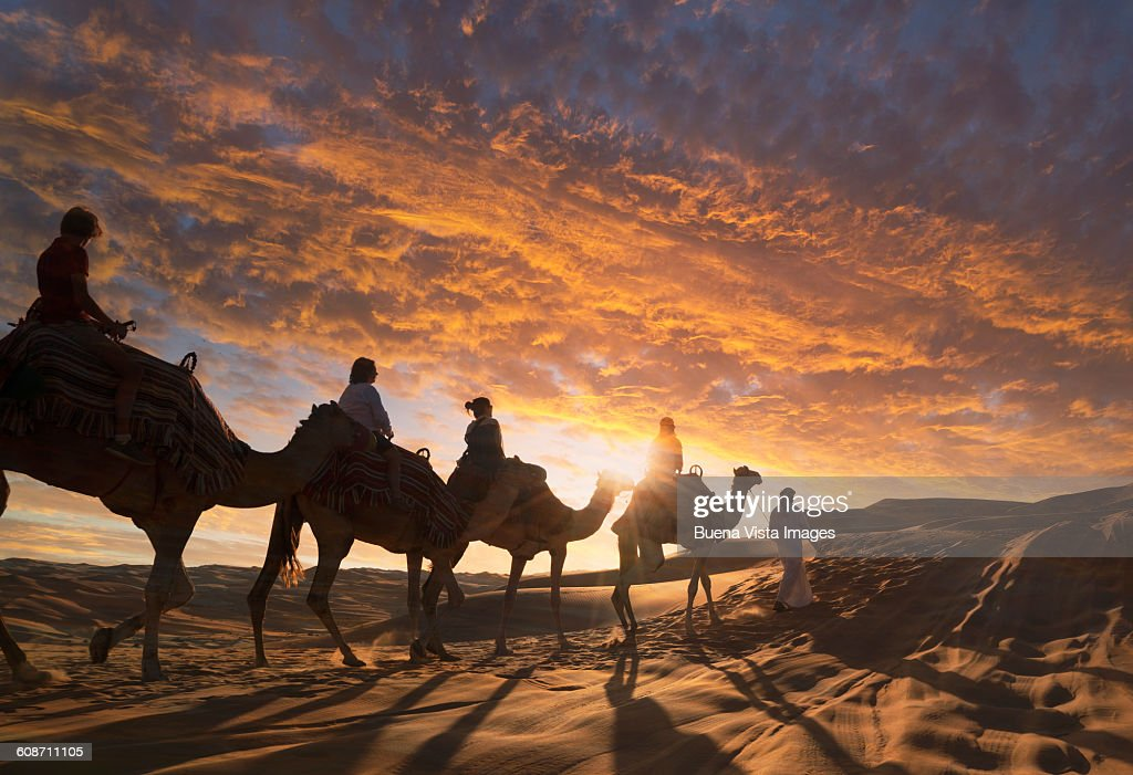 Tourists On Camels In The Desert At Sunset Stock Photo ...