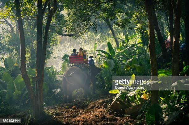 Tourists on elephants ride on the hills of Phuket, Thailand.