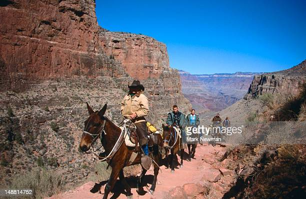 Tourists on mule tour.