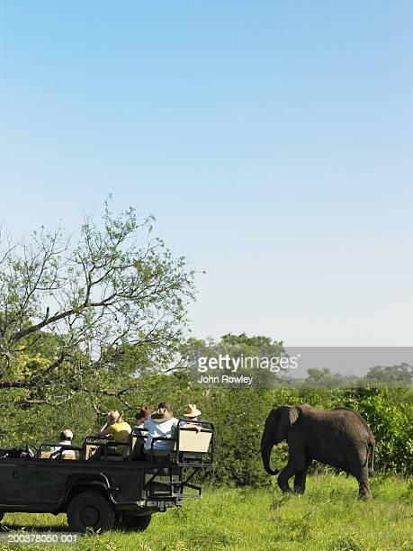 Tourists on safari in 4x4 near elephant