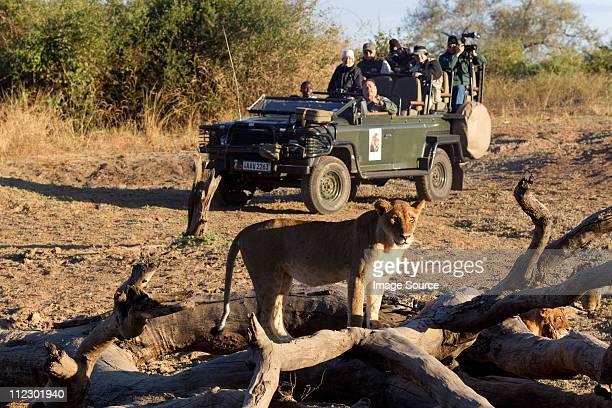 Tourists on safari view wildlife