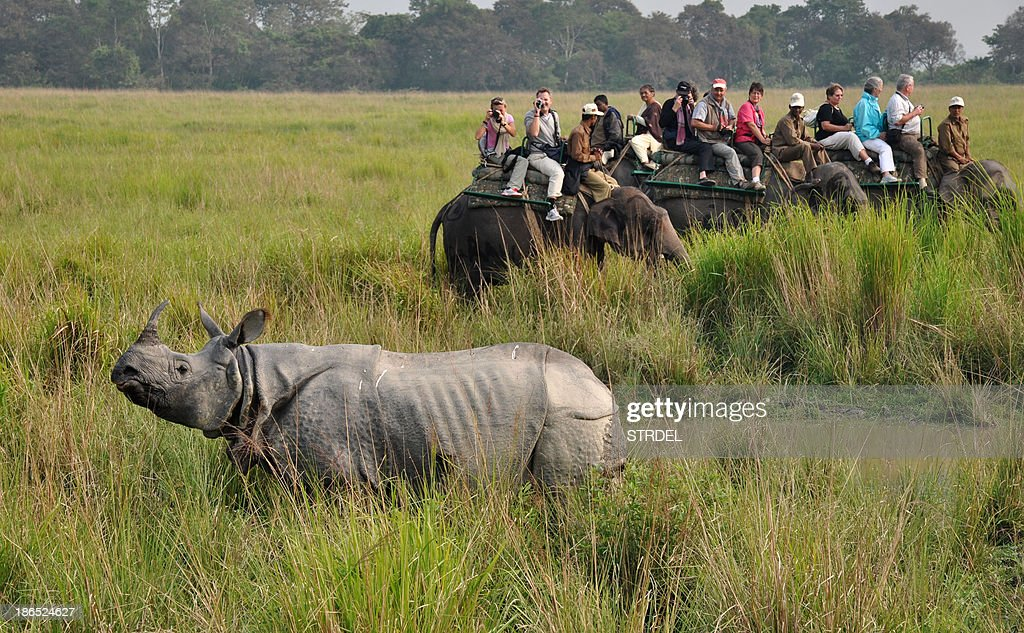 Tourists photograph a rhinoceros during an elephant safari at Kaziranga National Park, some 250kms east of Guwahati on November 1, 2013. The world famous Kaziranga National Park has reopened for tourists. There are seventeen species of mammals, twenty three species of birds and ten species of reptiles which are on the endangered list in Kaziranga which has the worlds largest concentration of Indian one-horned rhino. AFP PHOTO/Biju Boro