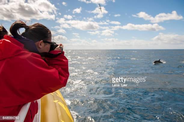 PENINSULA TASMANIA AUSTRALIA Tourists photograph dolphins off the coast of the Tasman Peninsula The tourists are on a cruise with Pennicott...