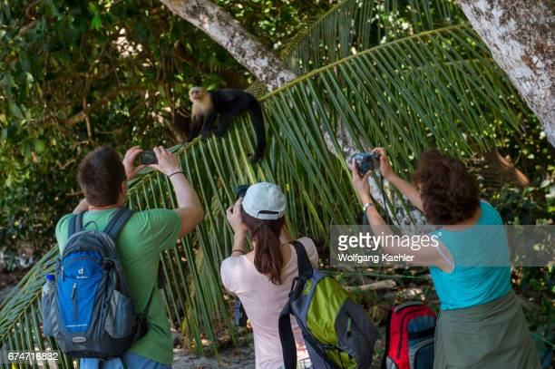 Tourists photographing a whitefaced capuchin monkey sitting on a branch in the rainforest of the Manuel Antonio National Park located at the Pacific...