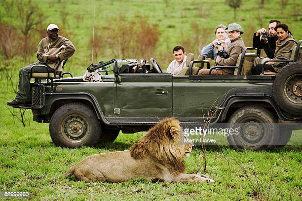 Tourists photographing male lion.
