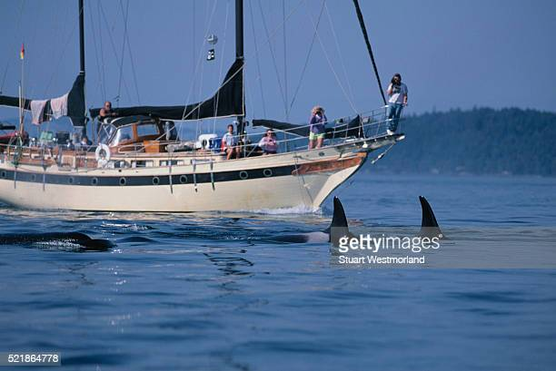 Tourists Photographing Orcas