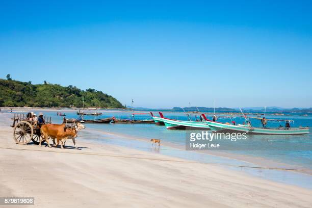 Tourists ride on ox cart along beach at Maung Shwe Lay village, near Ngapali, Thandwe, Myanmar