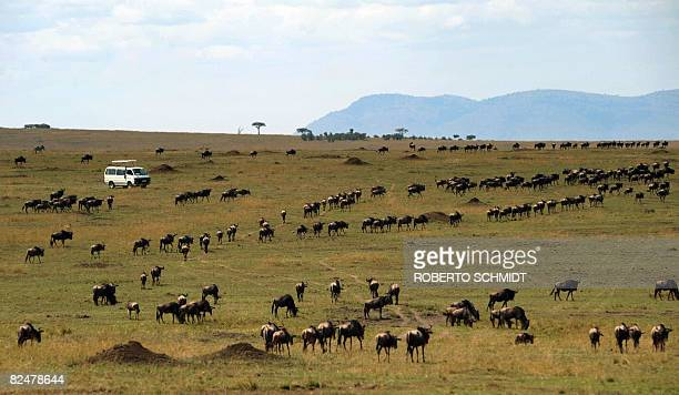 Tourists riding a safari tour vehicle watch a herd of Wildebeest make their way through a plain during the annual migration through the Massai Mara...