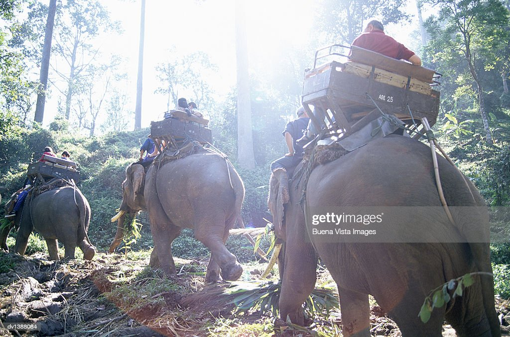 Tourists Riding Elephants in a the Jungle, Chiang Mai, Thailand, : Stock Photo