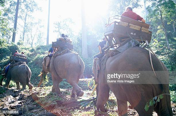 Tourists Riding Elephants in a the Jungle, Chiang Mai, Thailand,