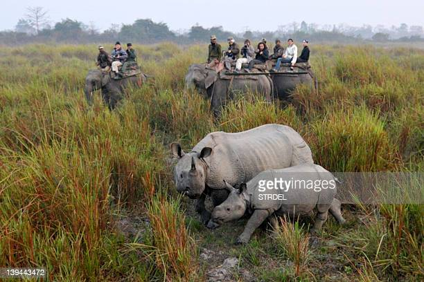 Tourists riding on elephants photograph a rhinoceros with her calf at the Kaziranga National Park some 230 km from Guwahati in India's northeastern...