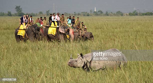 Tourists riding on elephants watch a rhinoceros at the Indian Pobitora wildlife sanctuary some 55 kilometres east of Guwahati on October 31 2015...