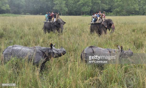 TOPSHOT Tourists riding on elephants watch Indian one horn rhinoceroses at Pobitora wildlife sanctuary some 55 kilometres east of Guwahati on October...