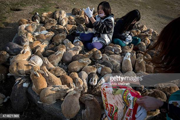 Tourists sit and feed hundreds of rabbits at Okunoshima Island on February 24 2014 in Takehara Japan Okunoshima is a small island located in the...