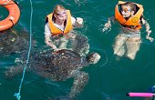 Tourists swim with turtles at the pier in Nuro Piura in northern Peru on July 12 2016 Overfishing has put in risk the subsistence of the 30000...