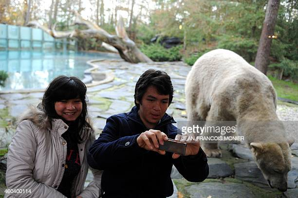 BAERT Tourists take a selfie from the winter garden of their lodge with Taiko a polar bear walking in its area in the zoo of the French western city...