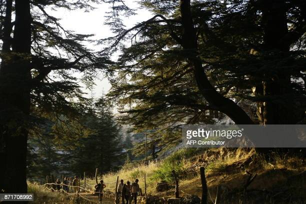 Tourists take A walk through the Lebanese Cedars forest at sunset near the northern Lebanese town of Besharre on August 6 2010 AFP PHOTO/JOSEPH EID /...