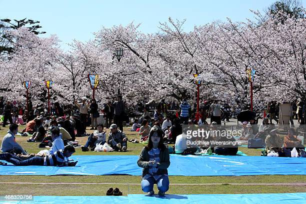 Tourists take part in 'Hanami' or Flowerviewing parties under cherry blossom trees in full bloom at Himeji Castle ground on April 2 2015 in Himeji...