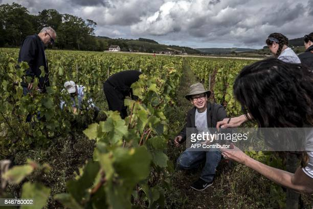 Tourists take part in 'l'experience vendange' an initiation to all stages of winemaking on September 11 2017 at the Chateau de Pommard / AFP PHOTO /...