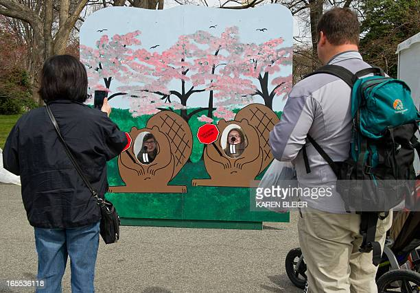 Tourists take photos of a wood cutout set up for the Cherry Blossom Festival at the Tidal Basin on April 4 2013 in Washington DC The National Park...