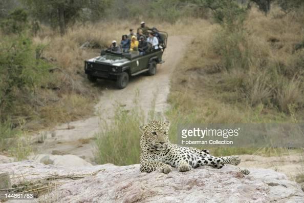 Tourists viewing Leopard Kirkmans Camp Safari Lodge Mala Mala Kruger National Park South Africa Africa