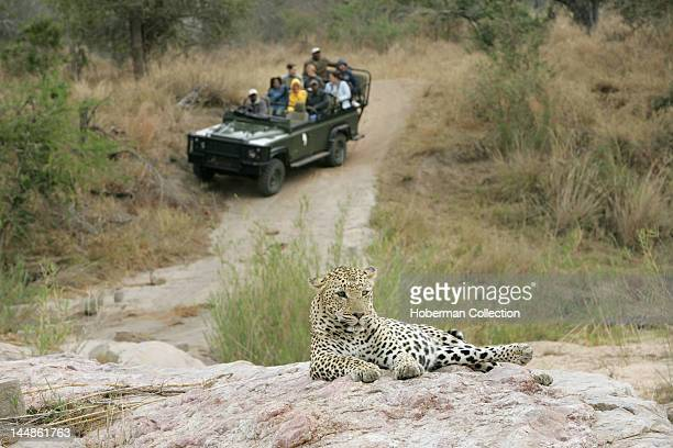 Tourists viewing Leopard Kirkmans Camp Safari Lodge Mala Mala Kruger National Park South Africa Africa