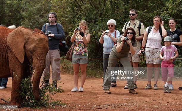 Tourists visiting Kenya watch a baby elephant at the David Sheldrick Wildlife Trust elephant orphange February 12 2008 in Nairobi Kenya According to...