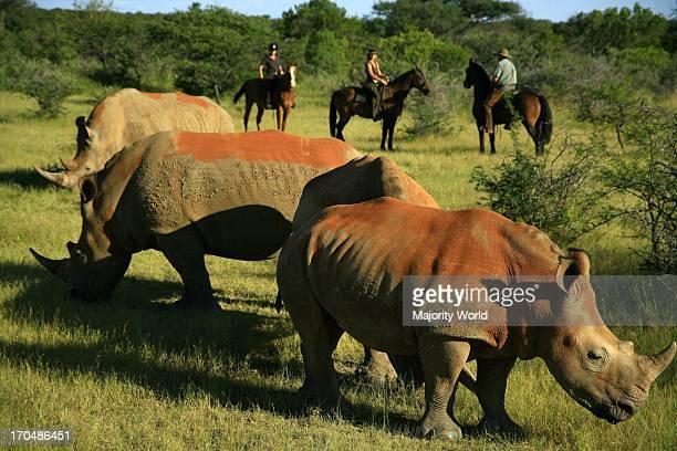 Tourists watching rhinos on a horseback safari in Waterberg South Africa February 20 2008