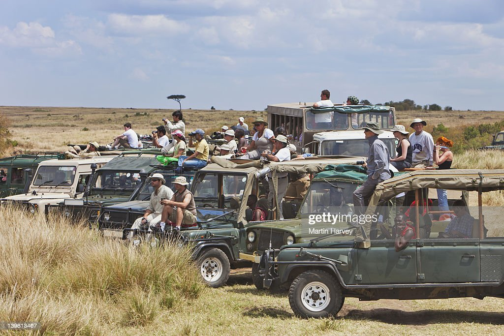 Tourists watching the wildebeest (Connochaetes taurinus) migration crossing the Mara river, Up to 8000 tourists a day can be in the Masai Mara during the migration months of August and September, Masai Mara National Reserve, Kenya, Africa : Stock Photo