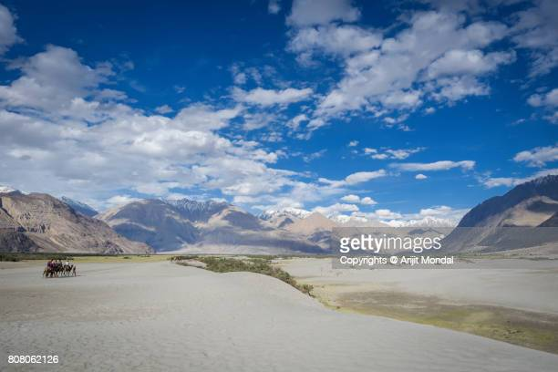 Tourists with Camels at Sand Dunes of the Cold Desert in Nubra Valley, Leh-Ladakh, India