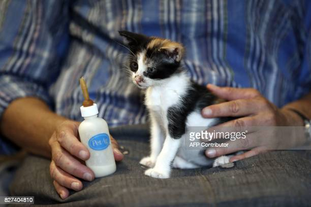 Tova Saul an Orthodox Jew feeds a stray cat at her home in Jerusalem's Old City on July 12 2017 For more than two decades Tova has fed and cared for...
